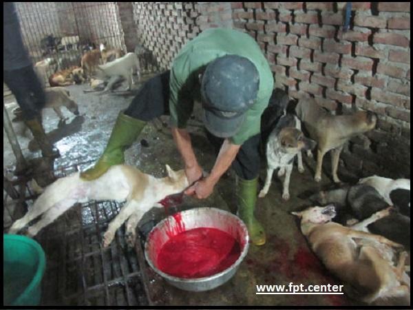Cách làm thịt mèo và chế biến những món ăn ngon từ thịt mèo