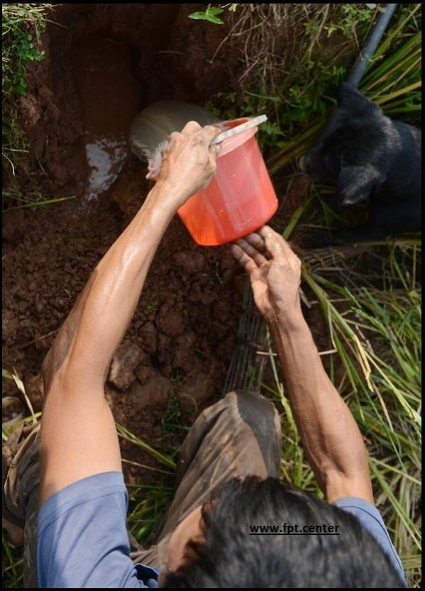 Cách bắt chuột đồng đơn giản mà hiệu quả ở các ruộng lúa